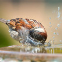 Bring on the Birds: Natural Habitat Ideas for Gardens of All Sizes