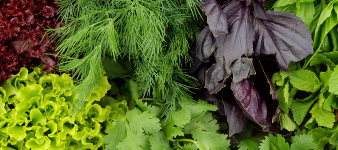 WHEN IT COMES TO LEAFY GREENS, YOU GET A GREEN LIGHT TO EAT AS MUCH AS YOU WANT — THAT'S HOW GOOD THEY ARE FOR YOU!