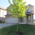 Leased – Spacious family home in Dundas