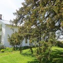 SOLD! Spectacular 1AC property surrounds this rare example, pre-confederation Ancaster Home